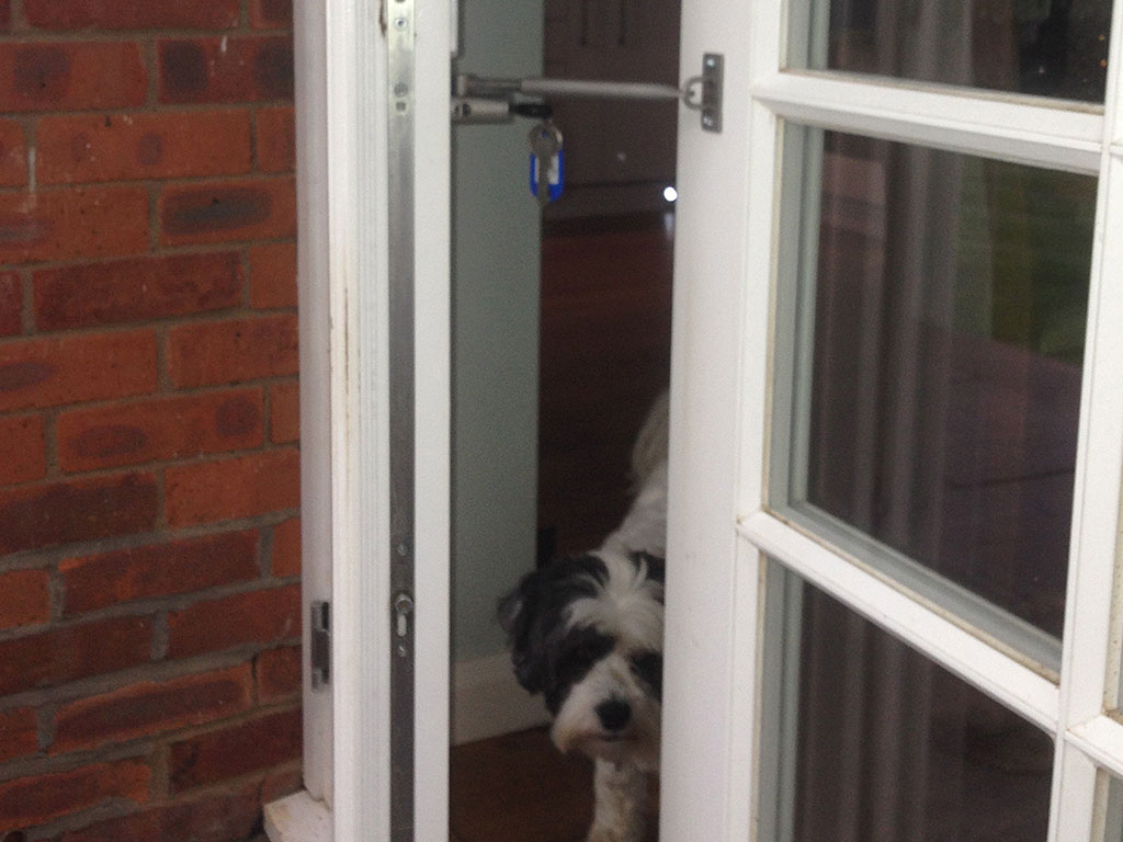 grande dog for door with patio screen your room pets installing stylish sliding