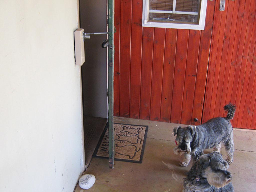 Cat Flap Or Dog Door Alternative Locklatch Usa