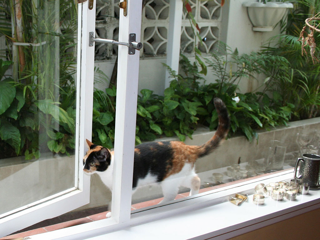 Cat Flap Or Dog Door Alternative Locklatch Usa