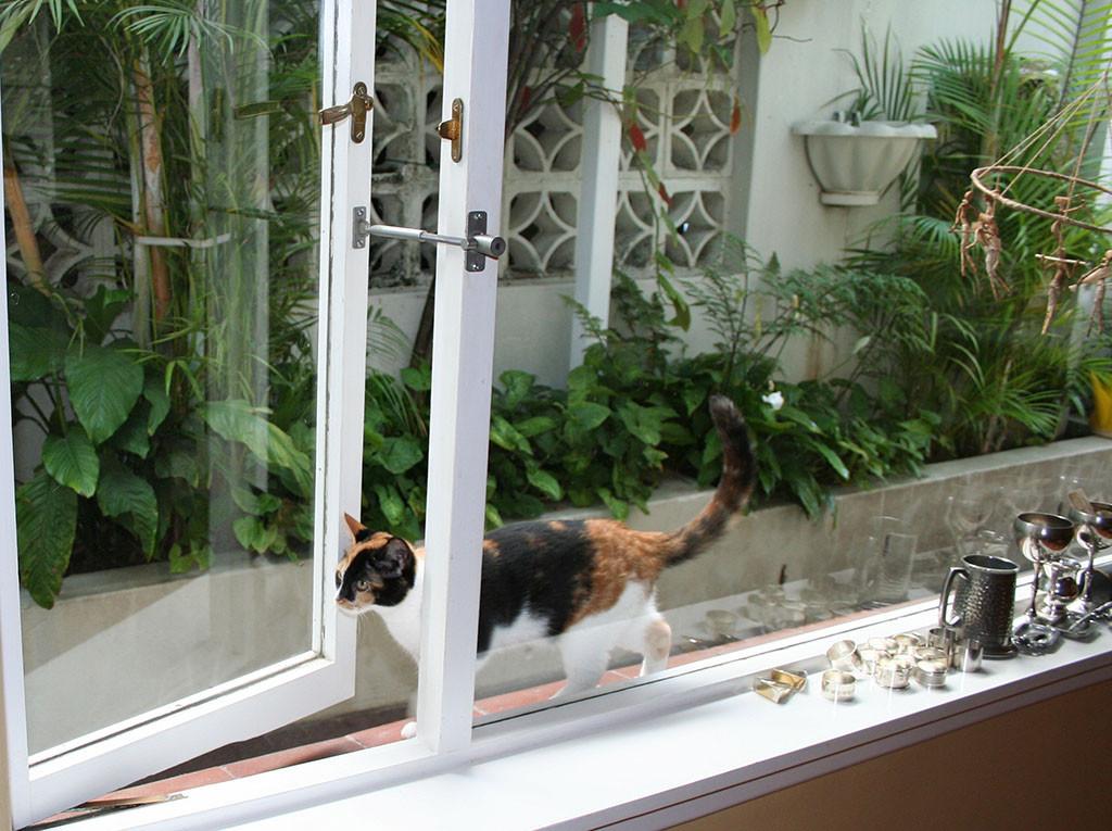 cat door alternative