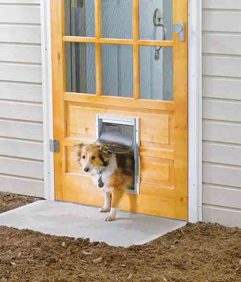 backyard dog door